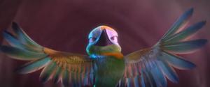 Brazillian-ruby-hummingbird-rio