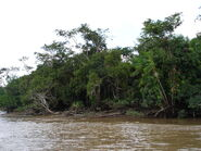 Side of the Amazon river