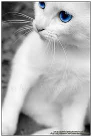 File:Novas Cat Sunny.jpg