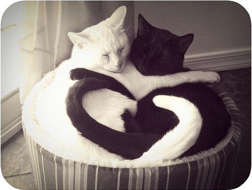 File:Cats!!!.jpg