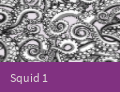 PatternCaseSquid1