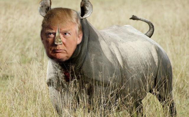 File:Rhino-trump.jpg