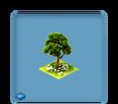 Leprechaun's Tree