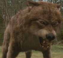 WerewolfWolfbeforeafter-560x460 (2)