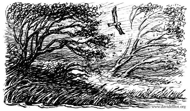 Fichier:The wind.jpg