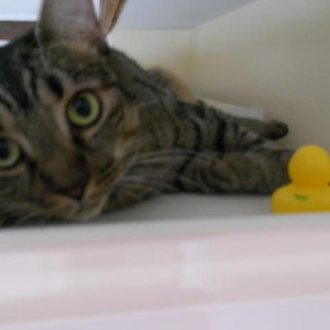 Twiggy's cat Flutter