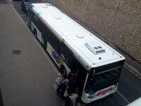 Bus vitalis (4)