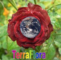 TerraFlora.png