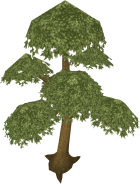File:140px-Yew tree.png