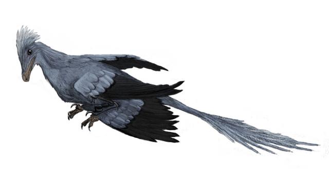File:Microraptor.png