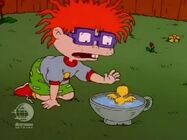 Rugrats - Chuckie's Duckling 126