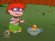 Rugrats - Chuckie's Duckling 144
