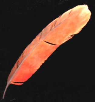 File:RedFeather.png