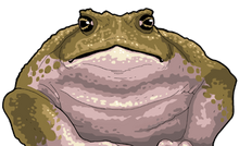 GIANT PLAGUED TOAD