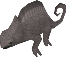 Adult chameleon (Wilderness)