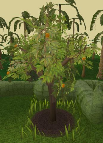File:Orange tree 7.png