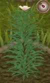 Rosemary5