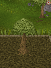 Spirit tree7