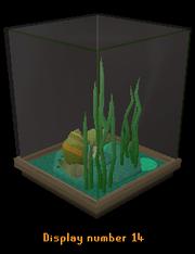 Snail display