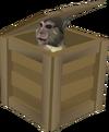 Crate (monkey)