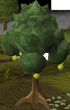 File:Lemon tree.png