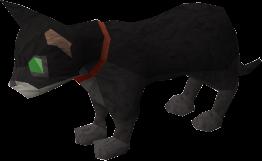 Pet kitten (black) pet