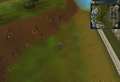 Compass clue Edgeville west of Edgeville Monastery.png
