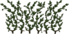 Ivy.png