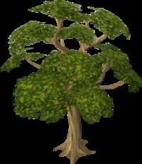 Mahogany tree.png