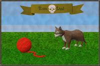Rum Deal kitten