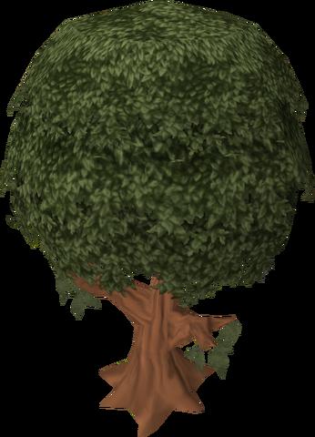 File:Cinnamon tree.png