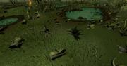Mort Myre Swamp2