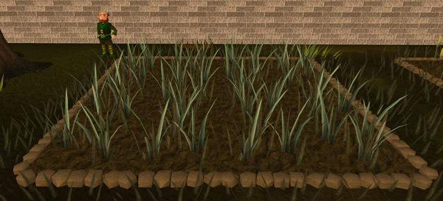 File:Reeds3.png