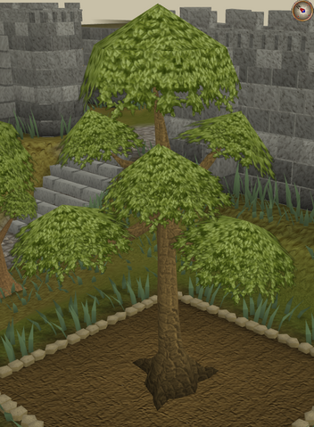 File:Yew7.png