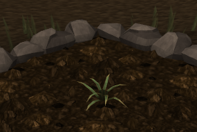 File:Pineapple plant 2.png