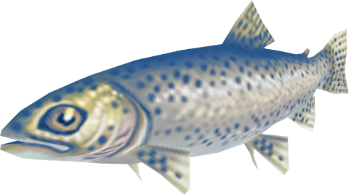 File:Trout (Aquarium).png