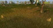 Rabbit hunt