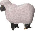 Penguin Sheep.png