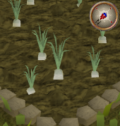 File:Onion3.png