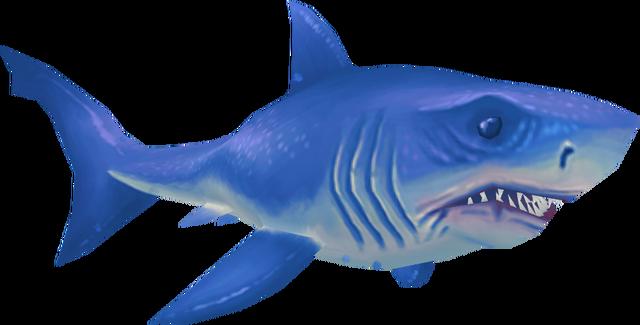 File:Great white shark (Aquarium).png