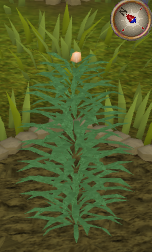File:Rosemary4.png