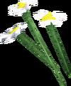 White flowers detail