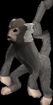 Baby monkey (grey and white) pet