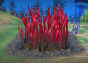Tasty looking seaweed