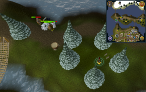 Scan clue Fremennik Isles inside ring of arctic pines on grassy island