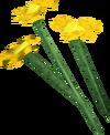 Orange flowers detail
