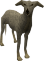 Greyhound (grey) pet.png