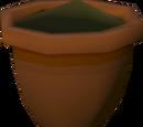 Yew seedling