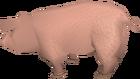 Pig old