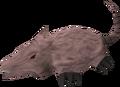 Brine rat.png